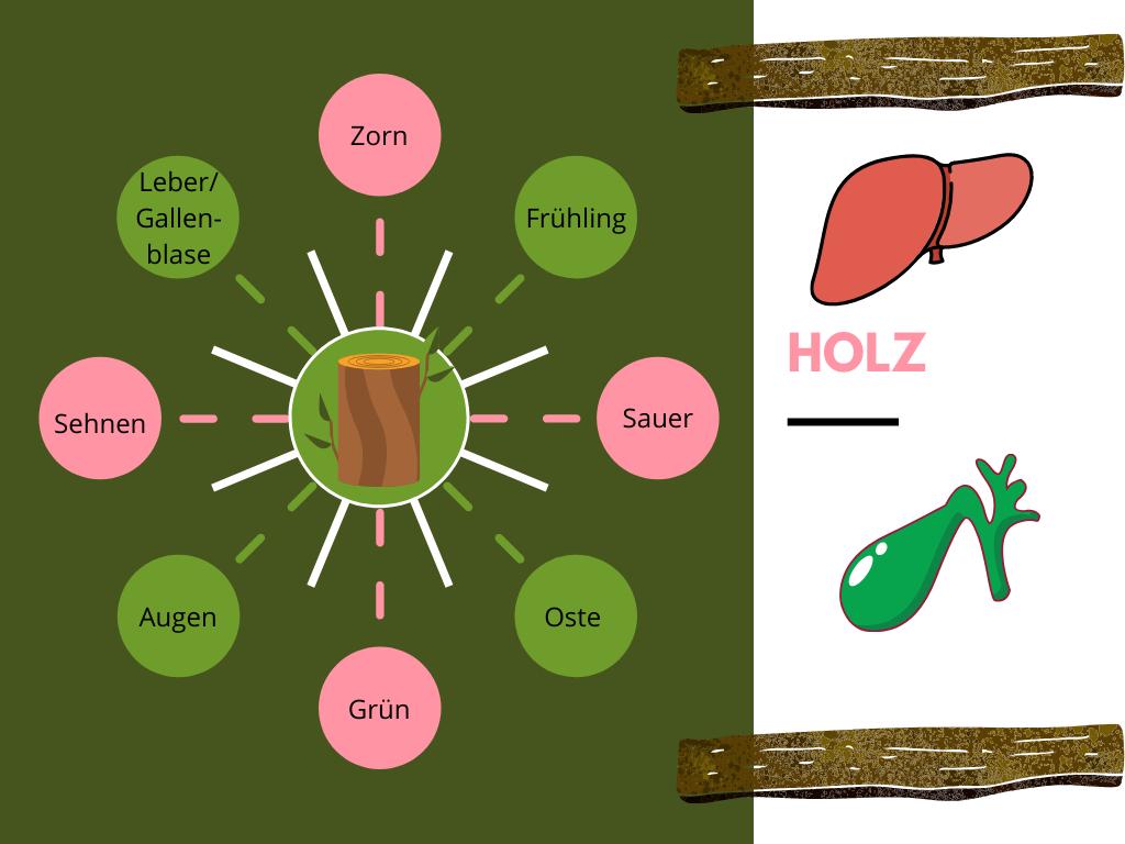 Dem Element Holz werden Zorn, der Frühling, der Geschmack Sauer, der Osten, die Farbe Grün, die Augen, die Sehnen und die Organe Leber/Gallenblase zugeordnet.