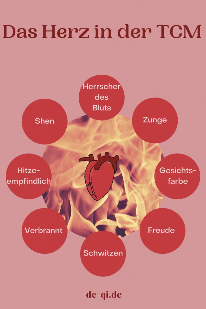 Dem Herz wir in der TCM die Freude, das Schwitzen zugeordnet. Es beherbergt Shen und zeigt sich in der Gesichtsfarbe und der Zunge. Das Herz ist Hitze-empfindlich. Sein Geruch ist verbrannt und seine Emotion die Freude.