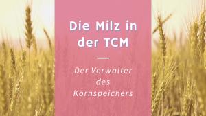 Die Milz in der TCM – Der Verwalter des Kornspeichers