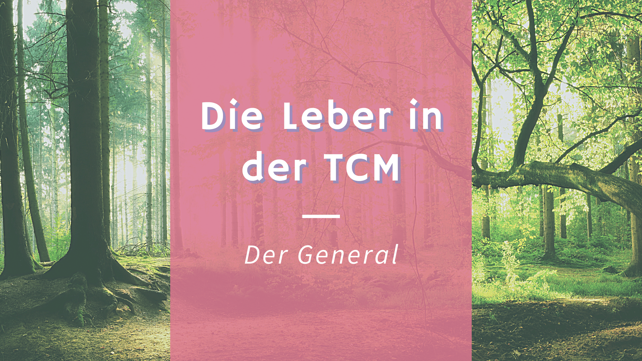 Die Leber in der TCM- Der General