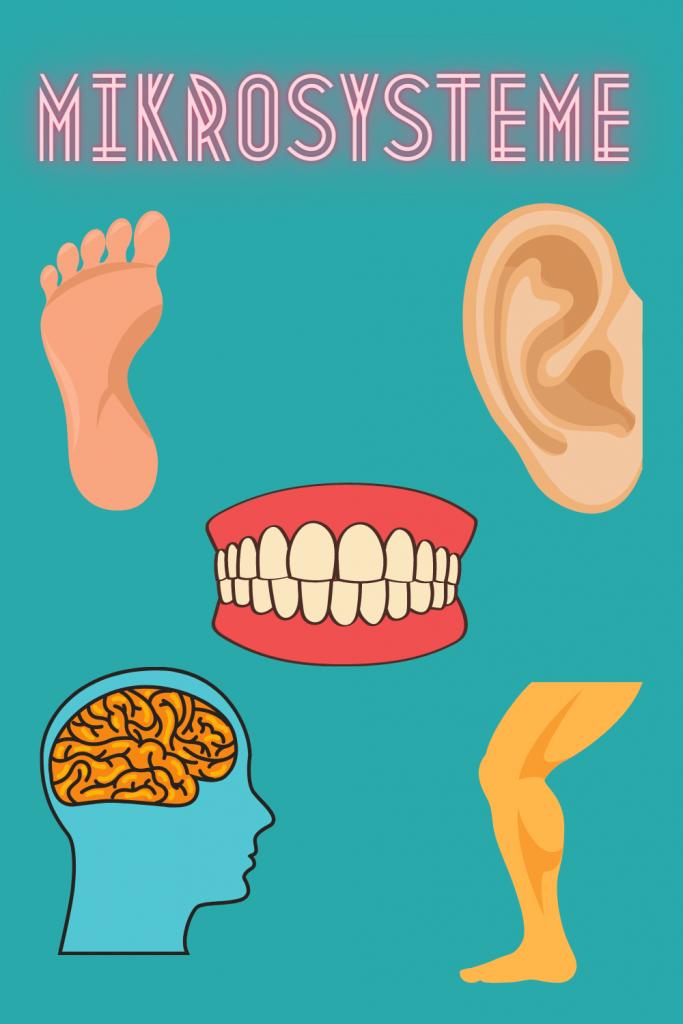 Mikrosysteme sind z.B. das Ohr, der Fuß, die Zähne, der Schädel und das Schienbein.